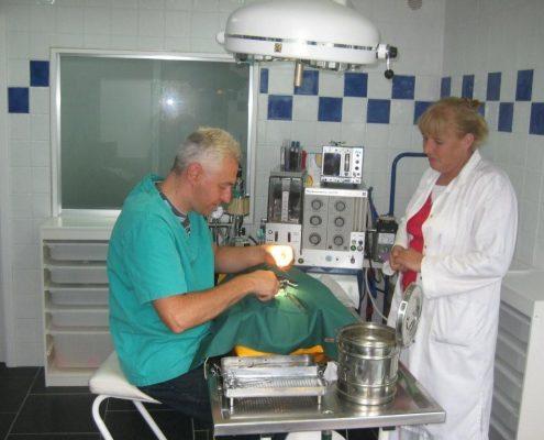 Operatie bij een dier Dierenkliniek Othene Terneuzen