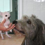 Kleine en grote hond Dierenkliniek Othene Terneuzen