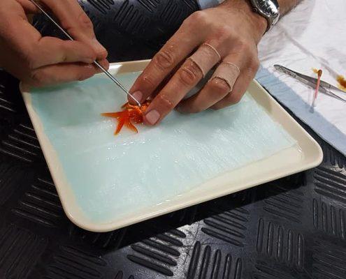 goudvis geopereerd Dierenkliniek Othene Terneuzen